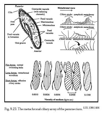 amoeba diagram color  amoeba  free engine image for user